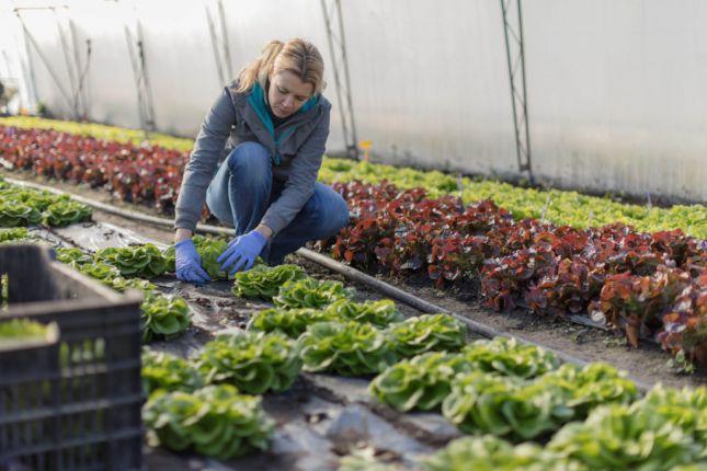Cultiver grâce aux serres de jardin